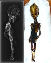 Adam, l'étrange humanoïde âgé d'une dizaine d'années. Plus petit que la normale et d'une corpulence très maigre (1,25 m pour 25 kg), le volume de son crâne, allongé et surmonté d'une crête osseuse, est disproportionné par rapport au reste du corps. Outre le fait qu'il dispose de dix paires de côtes au lieu de douze, il possède, semble-t-il, des qualités cognitives suprahumaines. Pour imaginer cette créature, je me suis très librement inspiré des représentations de « l'humanoïde d'Atacama » découvert en 2003 dans le désert chilien du même nom